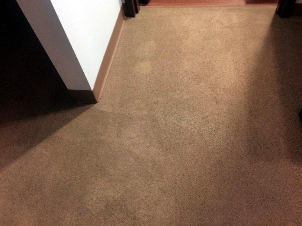 Spot Plus Carpet Care - Bleach spot removal 'after' photo
