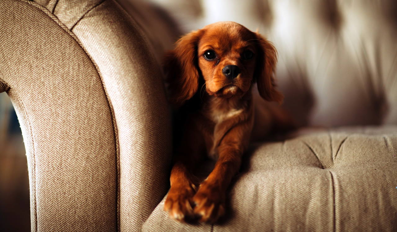 Spot Plus cleans and repairs furniture and upholstery, including pet damages.