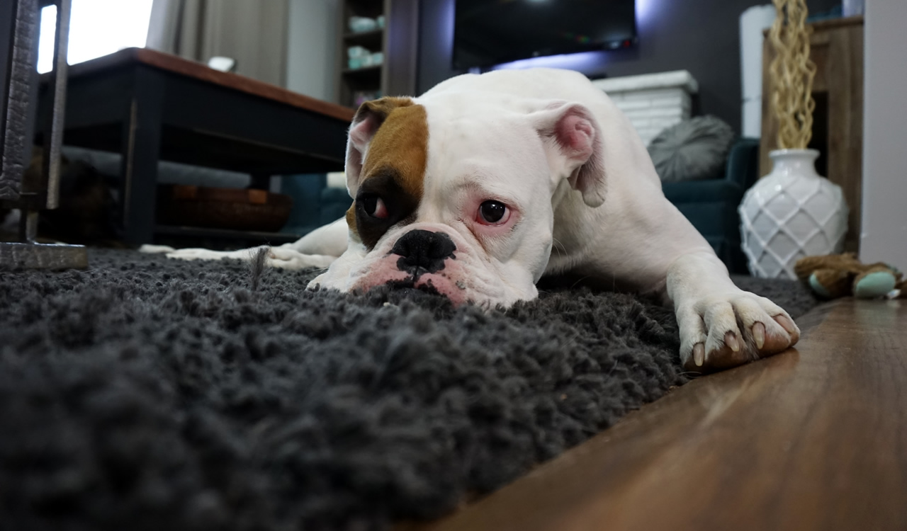 Call Spot Plus Carpet Care for reliable, affordable pet hair and fur removal.